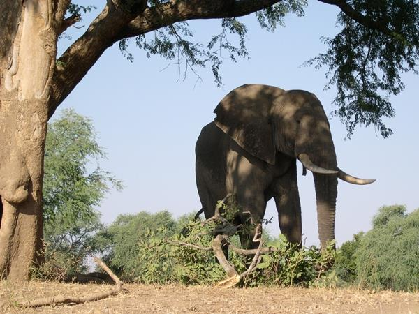 Zimbabwe holiday, small group tour