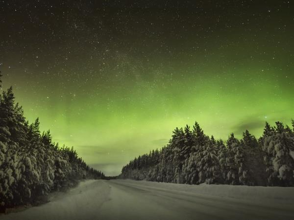 Lapland Northern Lights and moose tracking short break