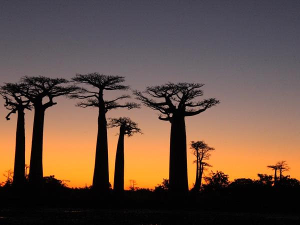 Madagascar vacation, overland adventure