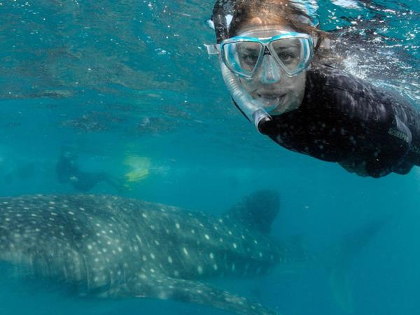 Mozambique vacations, beach & whale sharks