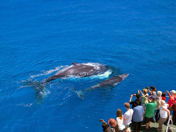 Head of Bight whale tour in South Australia