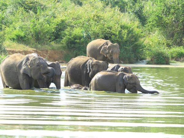 Sri Lanka wildlife holiday, the big five
