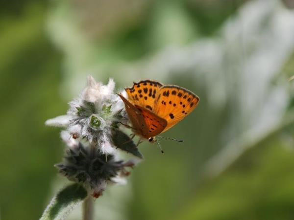 Central Greece nature vacation, flowers & butterflies