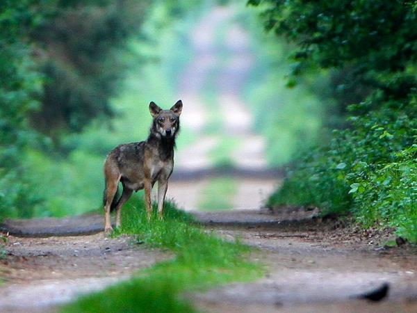 Wildlife vacation in Poland, Summer nature