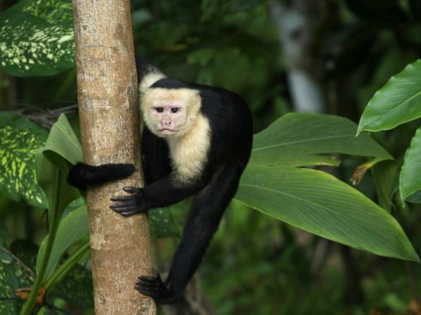 Costa Rica adventure vacation, tailor made