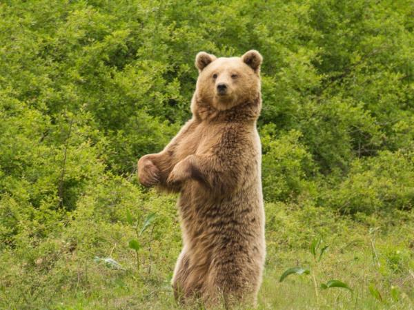 Northern Greece Bear Conservation Tour