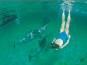 Swimming with dolphins, South Australia. Photo by South Australia