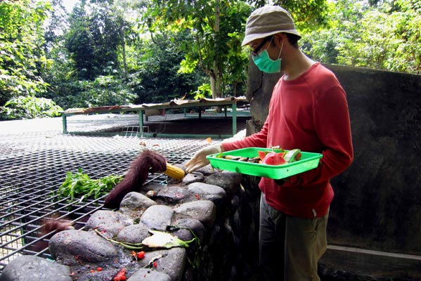 volunteering with orang-utans by Ecoteer