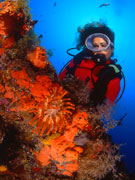 Diver and corals, Lanzarote. Photo by Lanzarote Tourist Board