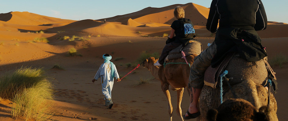 Berber guide leading camels