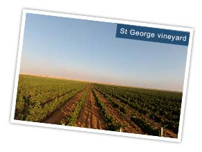 St George Vineyard, Jordan. Photo by Foad Khalil