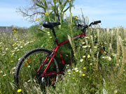Bike in a meadow of flowers, Menorca. Photo from Audax Hotel
