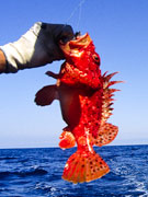 Red fish, Menorca. Photo by Menorca Tourist Board