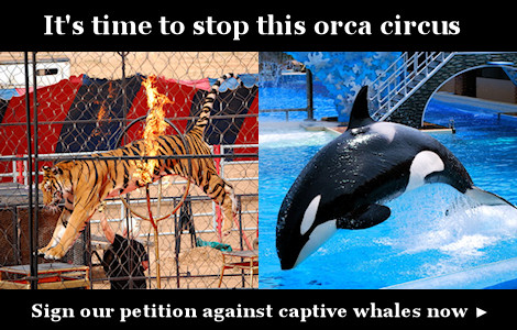 Sign our petition against captive whales now