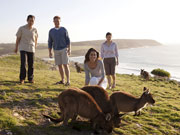Kangaroos on cliff top at Kangaroo Island, South Australia. Photo by South Australia