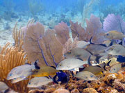 Reef fish, Cayman Islands. Photo by Cayman Islands Tourist Board