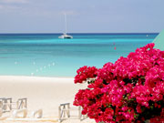 Flowers at Seven Mile Beach, Cayman Islands. Photo by Cayman Islands Tourist Board