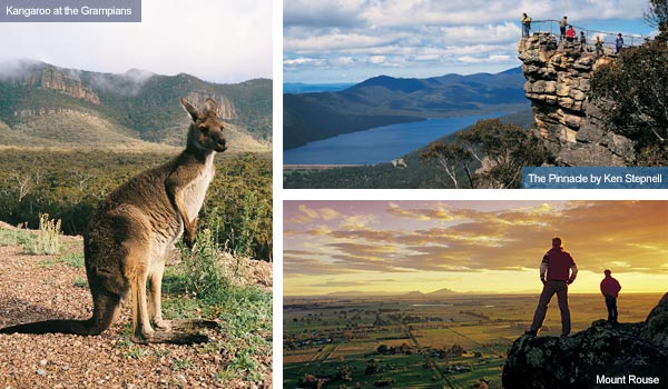 Kangaroo, Mount Rouse and the Pinnacle, Victoria. Photo from Victoria Tourist Board