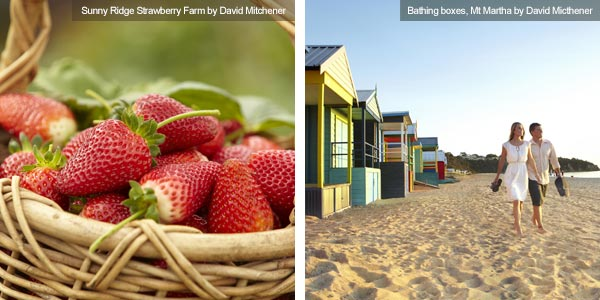 Strawberries at Sunny Ridge Strawberry Farm & bathing boxes at Mt Martha, Victoria. Photos from Victoria Tourist Board