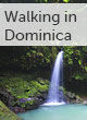 Dominica walking