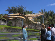 Whale skeleton at Museo de Cetáceos de Canarias, Lanzarote. Photo by Lanzarote Tourist Board